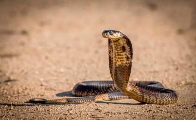 Самые длинные живые существа на планете. Фото