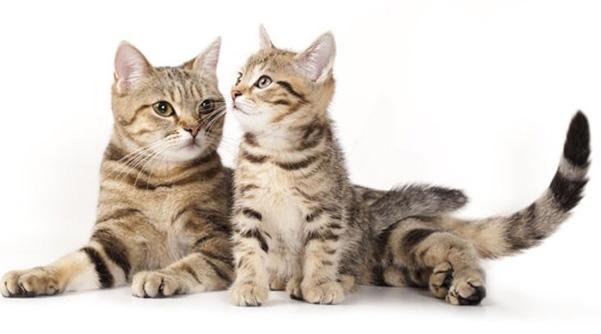 """Результат пошуку зображень за запитом """"Кошки и котята - Фото."""""""