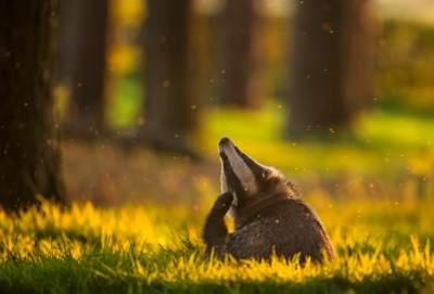 Дикая природа в лучших работах британских фотографов. Фото