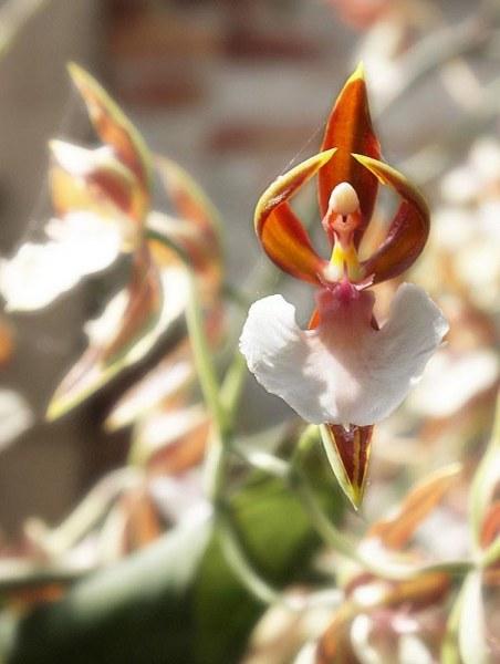 Цветы, которые напоминают разные вещи