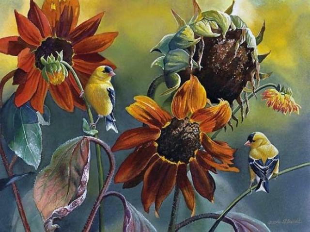 птицы в живописи Susan Bourdet - 03