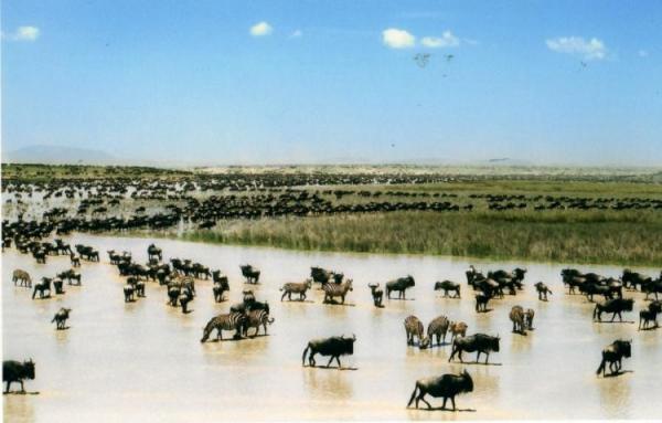 Миграции животных (34 фото)