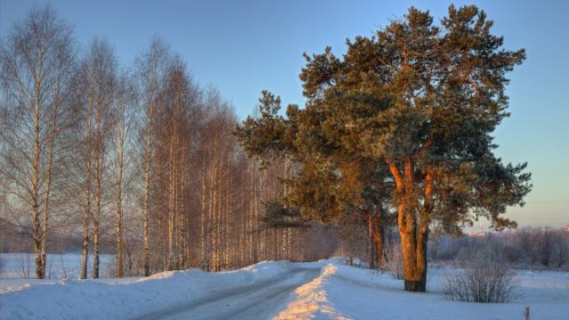 Зимние обои на рабочий стол солнечный зимний день в сосновом лесу