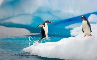 Жизнь пингвинов в дикой природе. Фото