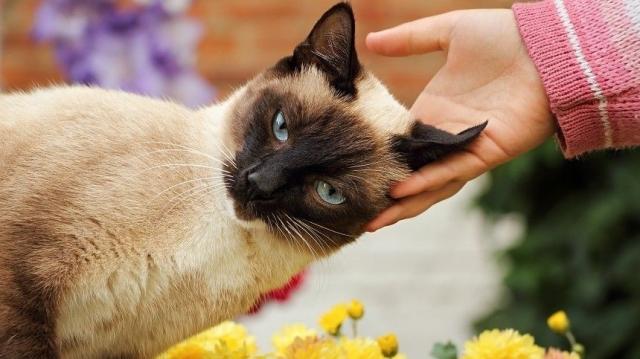 «Единственное животное в мире»: Куклачев раскрыл, почему кошки мурлычат