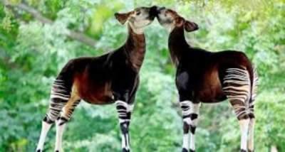 Необычные животные, оставшиеся в единственном экземпляре. Фото