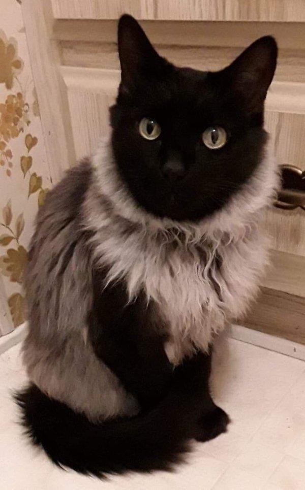 Необычные кошки и котики с уникальной внешностью