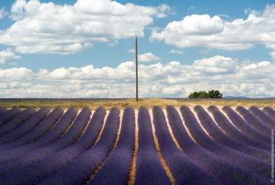 Удивительные по красоте пейзажи лавандовых полей Прованса. Фото