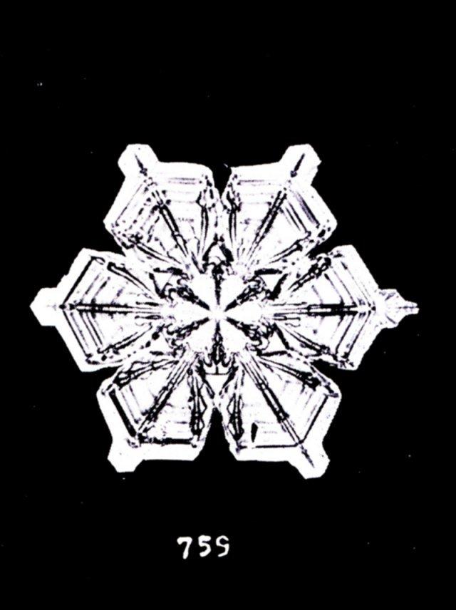 Невероятная красота: первые в мире фото снежинок - фото 417054