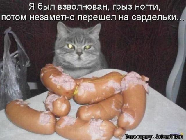 Уморительные кошачки в котоматрицах животные, коты, прикол, юмор