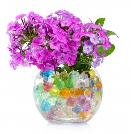 Картинки по запросу jenis tanaman hias hidrogel