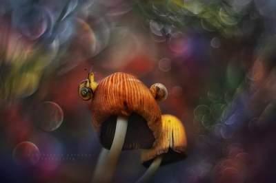 Лесные обитатели в макроснимках талантливого поляка. Фото