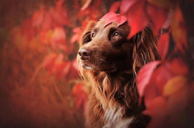 В своих работах фотограф также стремится передать индивидуальность каждой собаки.