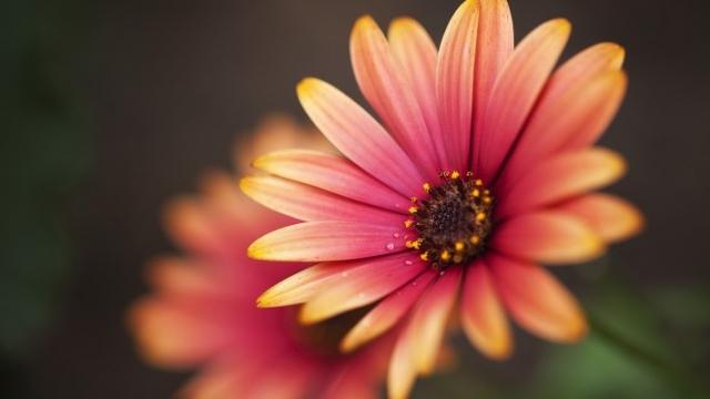 Нежный цветок