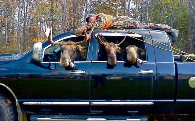 В США пьяные лоси имеют право садиться за руль