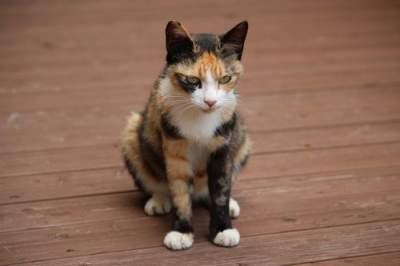 Милые животные, которые могут быть чрезвычайно кровожадными. Фото