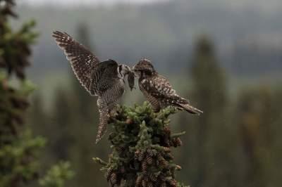Лучшие снимки птиц по версии Audubon Photography Awards. Фото