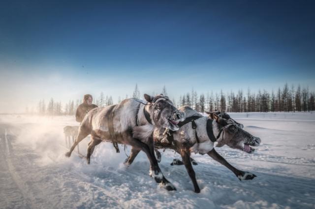Мы поедем, мы помчимся на оленях... Автор: Kamil Nureev.