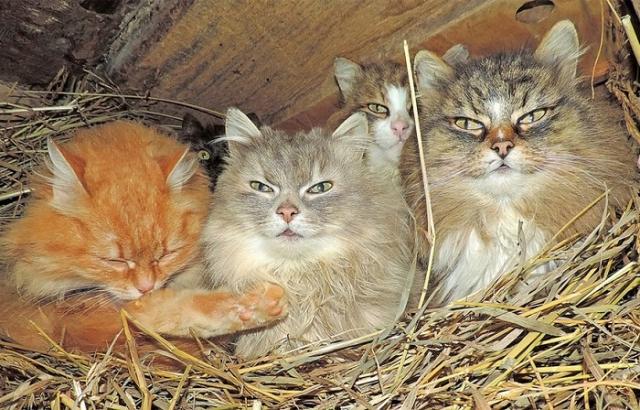 Одна из трех кошачьих «спален», расположенных в курятнике.