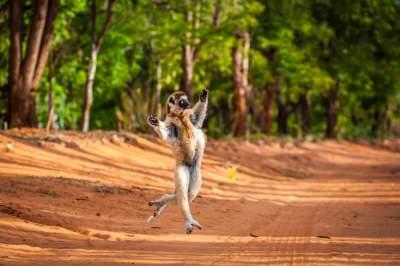 Дикие животные в снимках лучших фотографов. Фото