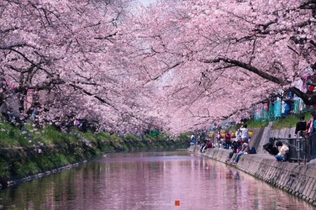 Городской весенний пейзаж в Японии.