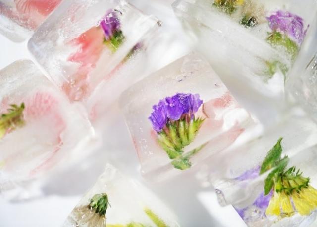 flower-3271753_960_720