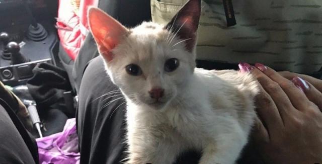 В Саранске котенок переплыл реку и нашел себе хозяев