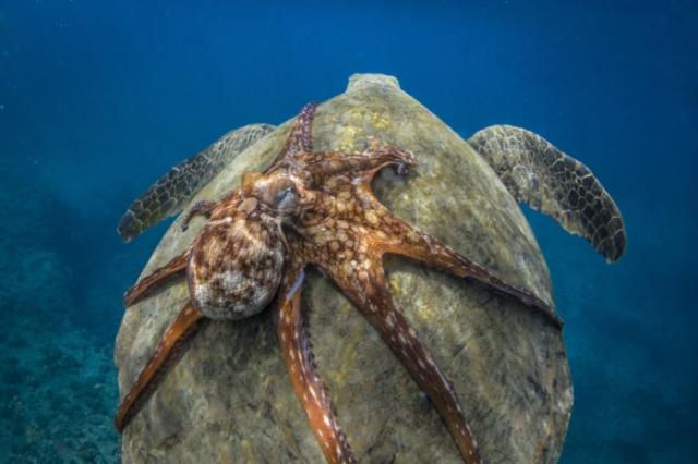 Покатай меня, большая черепаха! Автор: Michael B. Hardie.