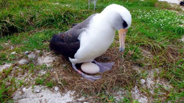 """Результат пошуку зображень за запитом """"анимации  птицы альбатрос"""""""