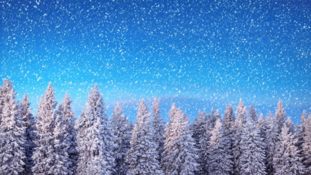 Зимние обои на рабочий стол зимний лес