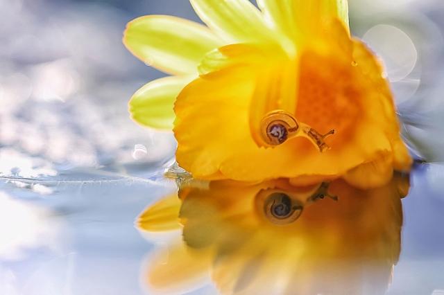 Желтое настроение. / Фото: Юлия Войнич.