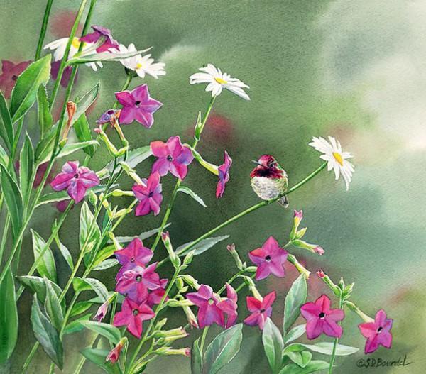 птицы в живописи Susan Bourdet - 07