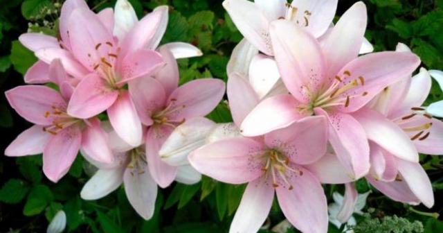 Картинки по запросу фото красивые цветы