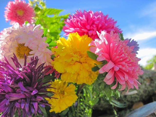 Картинки по запросу красивые цветы осени в китае