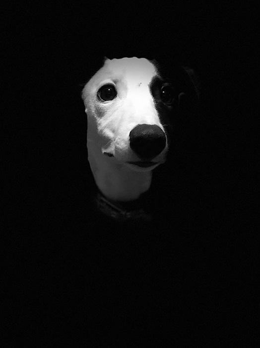 Автопортрет от Сиены Миллвард.