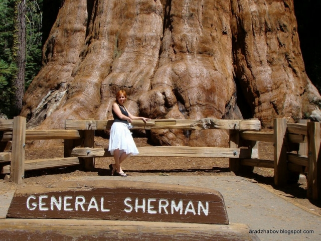 Генерал Шерман: самое большое дерево на планете (США)