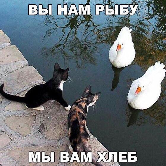 Коты и лебеди