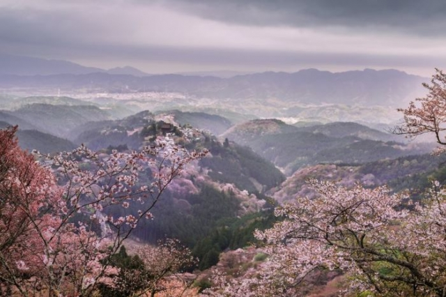 Раннее утро в горах в окружении цветущих сакур.