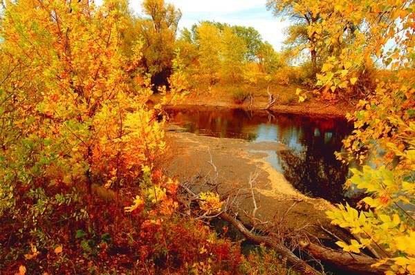 Закружилась листва золотая.В розоватой воде на пруду,Словно бабочек легкая стаяС замираньем летит на ...