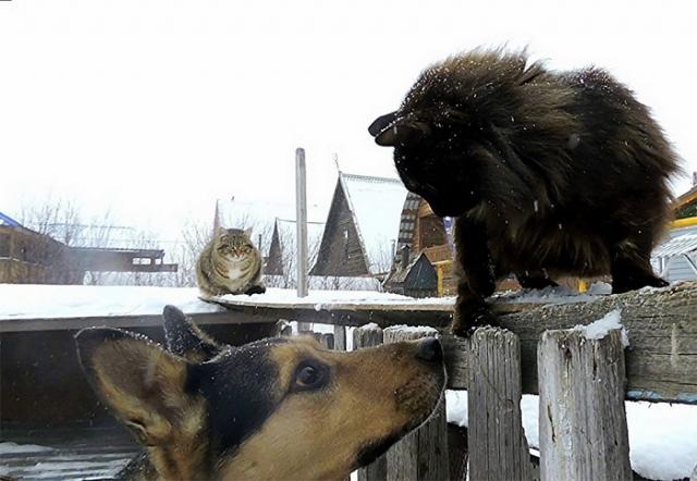 А вот собакам в кошачьи дела лучше не вмешиваться!