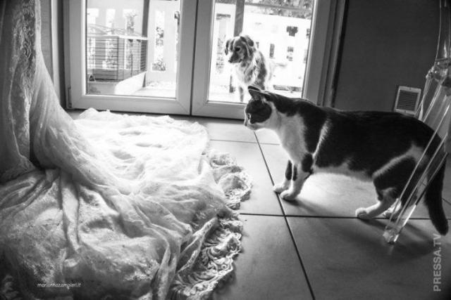 Фото: Без кота и свадьба не та: свадебные снимки с котом (Фото)