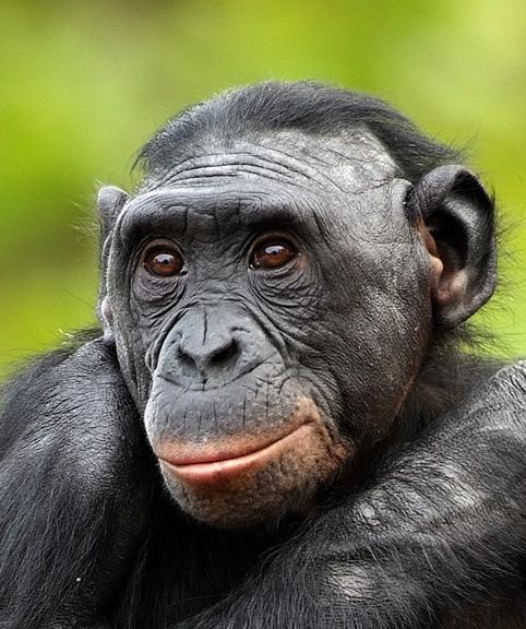 В мире животных (22 фото)