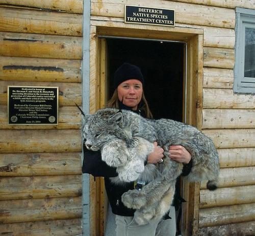 14 смертоносных животных, которые ведут себя, как будто они очаровательные котята