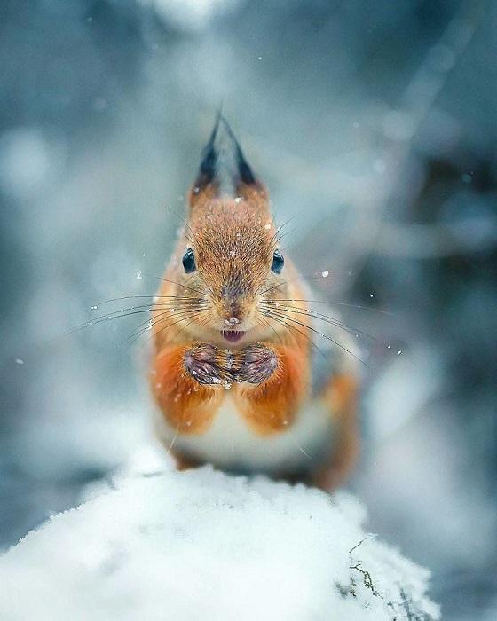 С помощью снимков фотограф стремится показать людям красоту дикой природы.